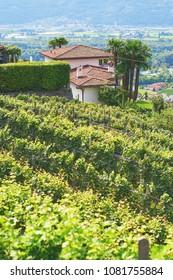 Beautiful Swiss grapeyard in Alps, Canton of Ticino