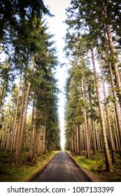 Beautiful symmetric view in czech woods area Brdy surrounded by huge coniferous trees