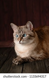 Beautiful tabby cat with big blue eyes