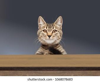 beautiful tabby cat peeking and looking down