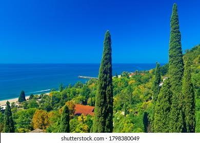 Beautiful tall cypress trees on the coast of Old Gagra. Abkhazia