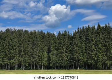 Beautiful tall firs and larches coniferous forest against blue sky with clouds. Woods in summertime in the Styria mountains, Austria.