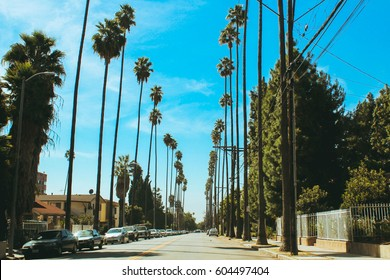 Beautiful tall palm trees growing on the sides of the streets of Los Angeles, USA. Near the Hollywood sign.
