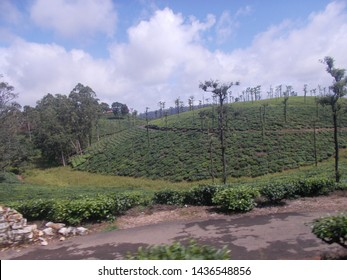 Beautiful tea estate view with sky background in valparai
