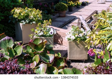 Beautiful terrace decorated with flowers and flowerpots