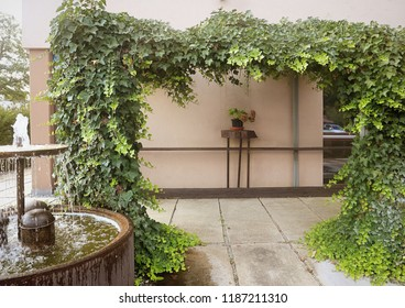 Beautiful terrace garden with lush ornamental rambling ivy for summer shadow and fountain