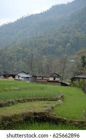Beautiful terraced rice field, green rice field or paddy field in Nepal