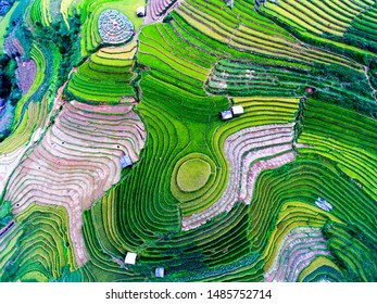 Beautiful terraced rice field in harvest season in Mu Cang Chai, Vietnam from aerial view.