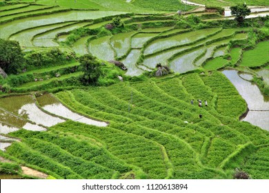 Beautiful Terraced rice field with rural houses in Bhutan. Bhutan is a small country in the Himalayas