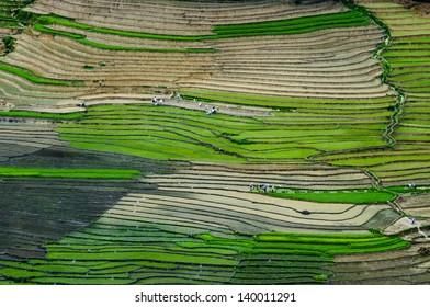 Beautiful terraced rice field in water season in Laocai province, Vietnam