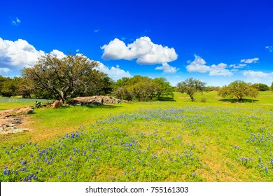 Beautiful Texas Hill Country ranch with bluebonnets and oak trees on a sunny day.