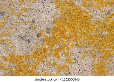 A beautiful texture of living and dying  lichen growing on a limestone rock in Bayfield Wisconsin.