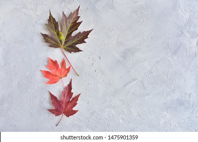 Beautiful textured maple autumn leaf selective focus on gray cement grungy background. Autumn concept with fall leaves on wood backdrop and empty space for text. Minimalistic autumn invitation card