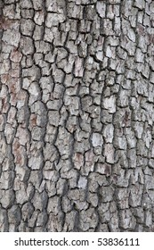Beautiful textured tree bark showing colors of brown, grey and white