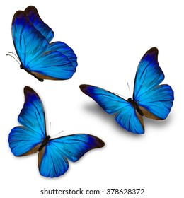 Beautiful three blue butterfly flying, isolated on white background