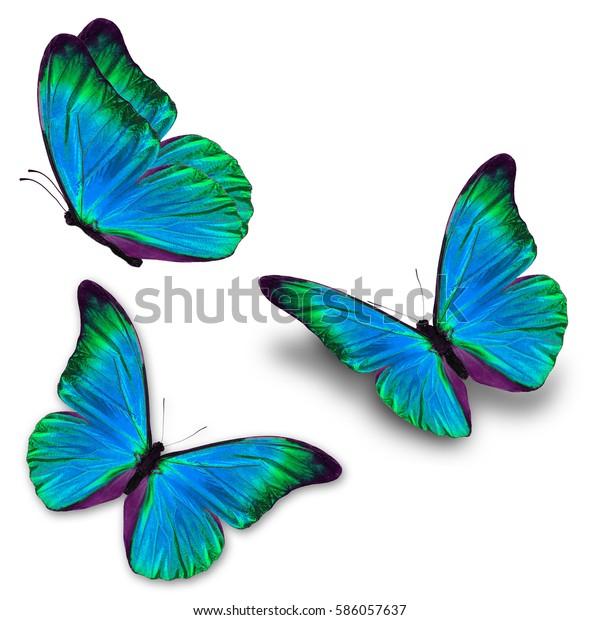 Schöne, dreiblaue Schmetterlingsfliege einzeln auf weißem Hintergrund