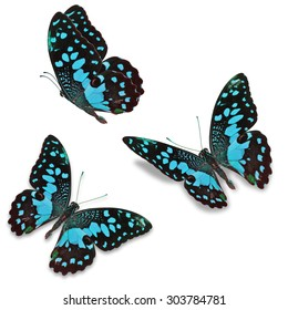 Beautiful Three blue butterfly, isolated on white background