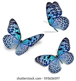 Schöner, drei bunter Schmetterling einzeln auf weißem Hintergrund