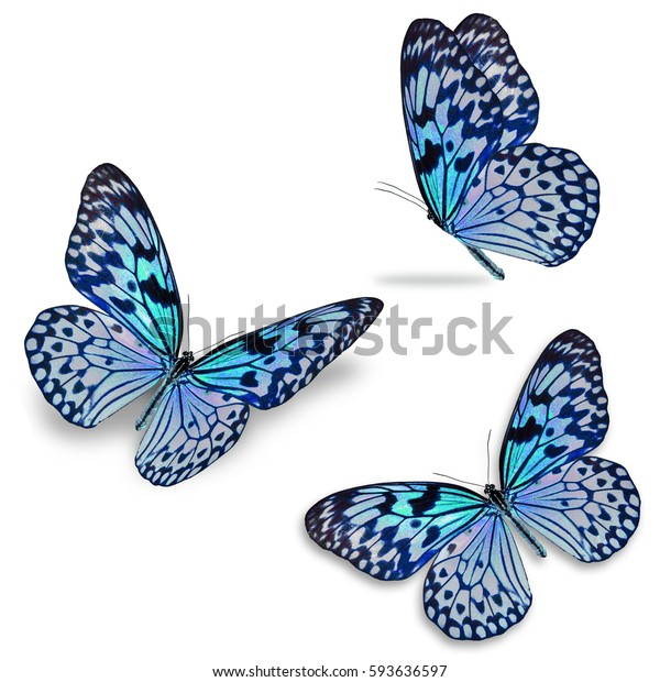 Beautiful three colorful butterfly, isolated on white background
