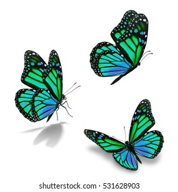 Beautiful three green monarch butterfly, isolated on white background