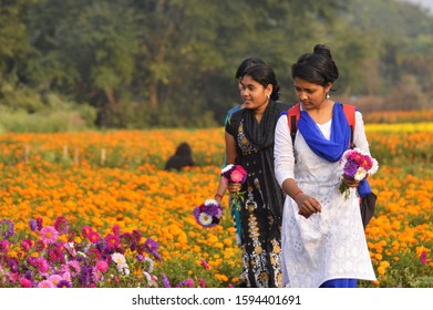 beautiful three Indian college girl collect flower from garden of bengal's valley of flower .image taken at khirai,medinipur,west bengal,India on 6th February 2018