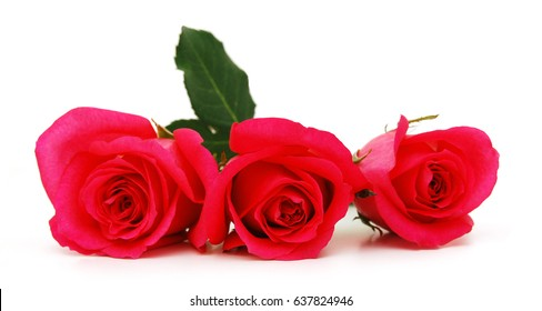 Beautiful three roses on a white background