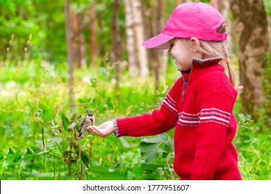 beautiful three-year-old girl in a red sweater feeds pine nuts with her hands on a titmouse on a clear summer day
