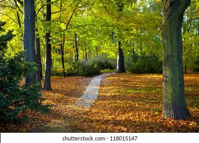 The beautiful Tiergarten in Berlin, Germany.