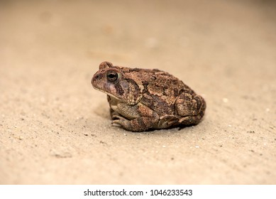 A beautiful toad waiting fo the flies