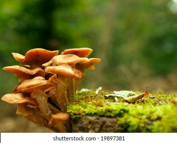 Beautiful toadstools around a tree with moss