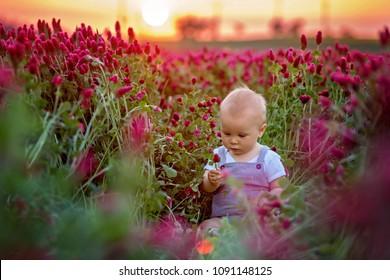 Beautiful toddler boy in gorgeous crimson clover field on sunset, springtime