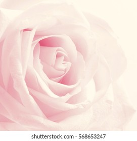 Beautiful toned pink rose close up can use as valentines day background. Wedding background. Soft focus. In Sepia toned. Retro style
