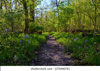 Beautiful Trail in Missouri on a Spring Morning