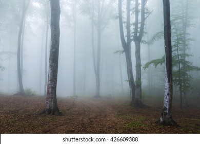Beautiful trail in misty forest