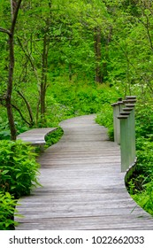 Beautiful Trail at a Wildflower Garden