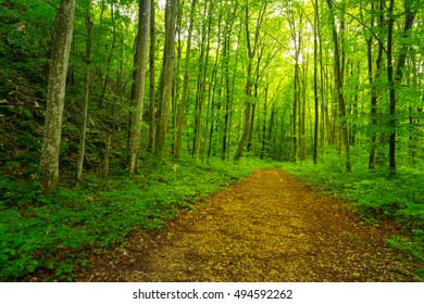 Beautiful trail in the woods, with lush green foliage, in spring