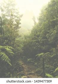 Beautiful Trails of New Zealand