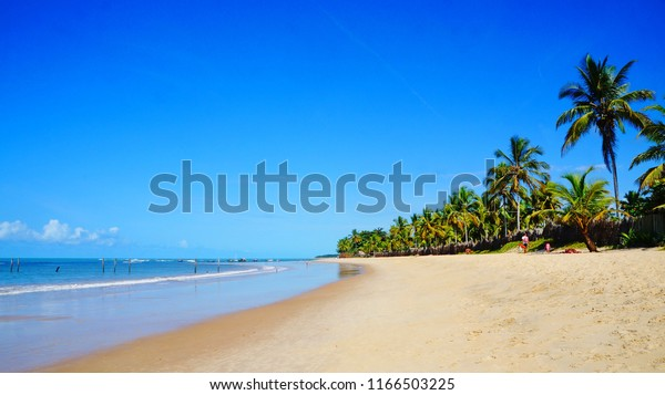 Beautiful Trancoso beach with palm trees, near Port Seguro in state of Bahia, Brazil