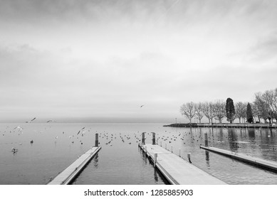 Beautiful tranquil dramatic black and white tone of misty and cloudy lake Geneva with flying and swimming bird and swan, and waterside and pier without people in Lausanne, Switzerland.