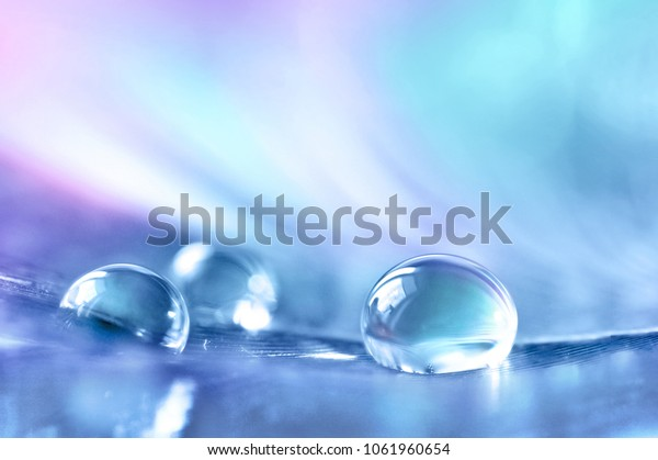 Beautiful transparent drops of rain water on a feather on a blue and violet background, macro, copy space. Bright colorful artistic image of nature.