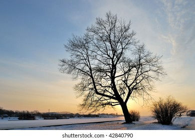 A beautiful tree against the golden winter sunset