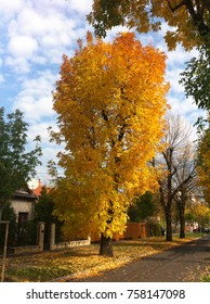 A beautiful tree in autumn