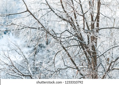 Beautiful tree branches covered with ice and white snow in winter
