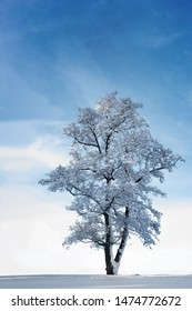 Beautiful tree covered in snow on bright blue sky
