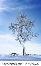Beautiful tree covered in snow on bright blue sky, with wooden tables and benches also covered in snow.