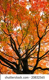 Beautiful tree during fall