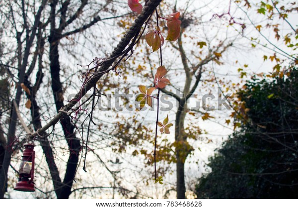 Beautiful tree and fall leaves