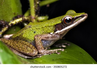 a beautiful tree frog