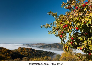 beautiful tree full of red apples standing in the countryside orchard with autumn colorful mountains  view