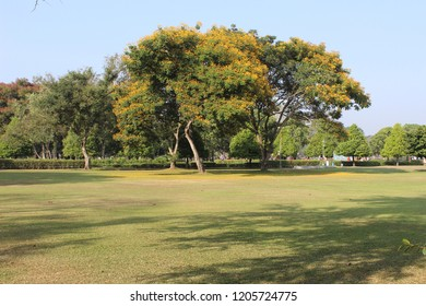 Beautiful Tree Landscape